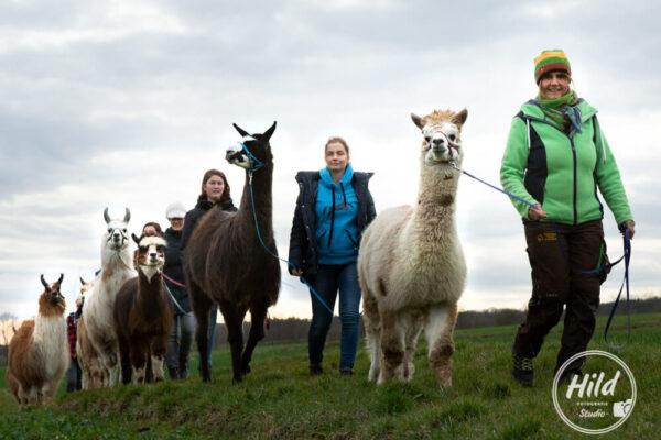 Erlebnistouren mit Alpakas und Lamas