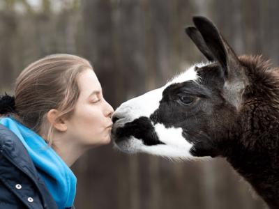 Lamatherapeut Alpakatherapeut Ausbildung