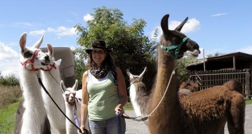 Lamaherde der Orenda-Ranch