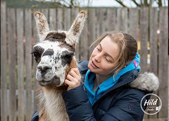 Grundlagenseminar für Lama- und Alpakahalter