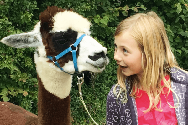 Kindergeburtstag mit Lamas und Alpakas