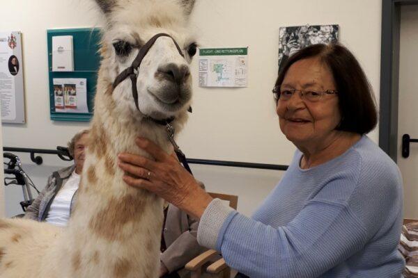 Besuch-Seniorenheim-Lama (Medium)