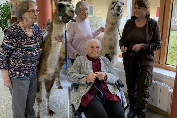 Gruppenbild-Lamas-Seniorenheim (Medium)