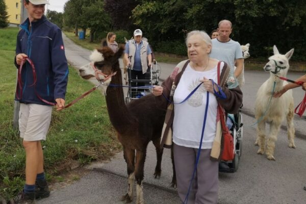 Lamas-Alpaka-Spaziergang-mit-Senioren (Medium)