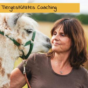 Tiergestützes Coaching mit Alpakas und Lamas
