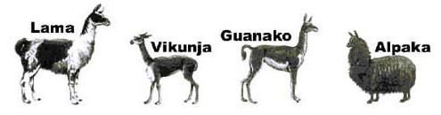 Lama-Arten